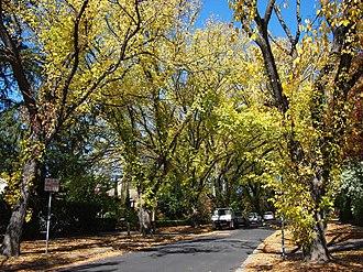 Griffith, Australian Capital Territory - Grant Crescent