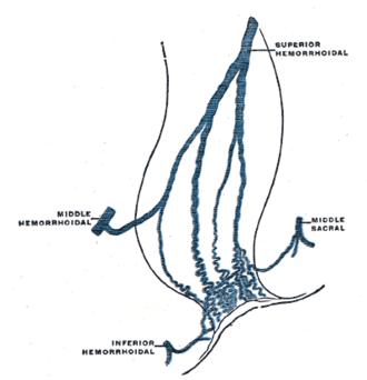 Inferior rectal veins - Scheme of the anastomosis of the veins of the rectum