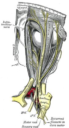 Čtvrtý hlavový nerv