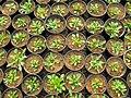 Greenhouses in mahallat 12.jpg