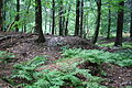 Großsteingrab Drangstedt 2 03.JPG