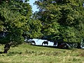 Group of horses at Thorpe Farm - geograph.org.uk - 554482.jpg