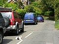 Guard Dog - geograph.org.uk - 1296380.jpg