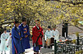 Gurye Sansuyu Flower Festival in Spring - 4402796001.jpg
