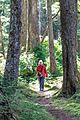 Haida Gwaii (Queen Charlotte Islands) - Graham Island - a few hikes around the N end of Naikoon Provincial Park - a little bit of the Cape Fife trail - Sanne on the trail - (20940700943).jpg