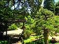 Hakone Gardens, Saratoga, CA - IMG 9151.JPG