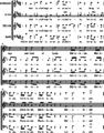 Hallelujah Chorus (conclusion).png