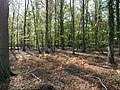 Hambach forest 27.jpg
