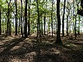 Hambach forest 51.jpg