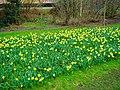 Harderwijk - Drielanden - Muziekpad - Spring 2010 - View North I.jpg