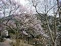 Hasedera Temple 長谷寺 - panoramio (8).jpg