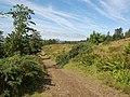 Healaval Forest - geograph.org.uk - 222438.jpg