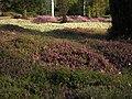 Heidelandschaft im Forstbotanischen Garten.jpg