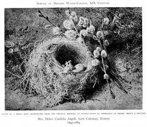 Helen Cordelia Angell - Study of a bird's nest