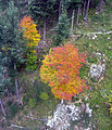 Herbstwald von der Schauinslandbahn 4.jpg