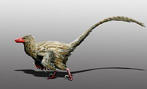 Description de l'image Hesperonychus elizabethae.jpg.