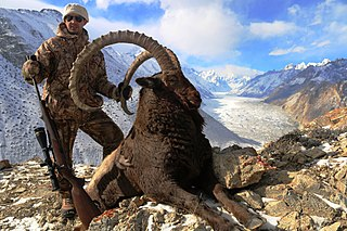 Trophy hunting Hunting of wild animals for recreational purposes