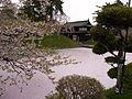 HirosakiCastleSakura1.JPG