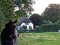 Horse and thatched cottage, Bramdean - geograph.org.uk - 978064.jpg
