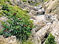 Huesca (provincia), flora 1982 02.jpg