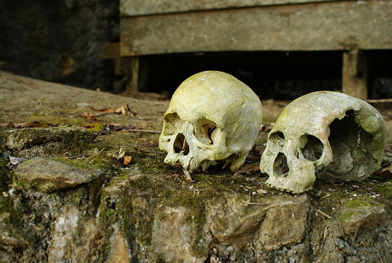 File:Human skulls.JPG