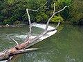 Humber River (Ontario).jpg