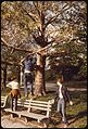 IN PROSPECT PARK, BROOKLYN - NARA - 551735.jpg