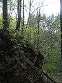 Ichalki forest.jpg