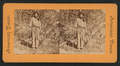 Indian Tom. Yosemite Valley, by E. & H.T. Anthony (Firm).png