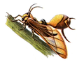 Insects in Brockhaus 1937.png