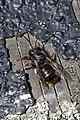 Insekten Verschlüsse- 2019 by-RaBoe 081.jpg