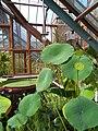 Interieur waterplantenkas Oude Hortus Utrecht.jpg