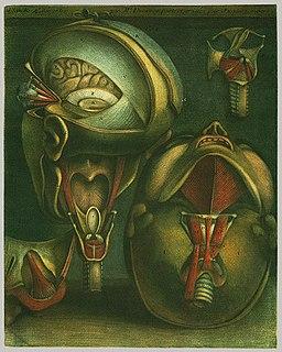 Jacques Fabien Gautier dAgoty painter from France
