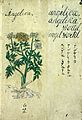 Japanese Herbal, 17th century Wellcome L0030041.jpg