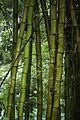 Jardim Botânico do Rio de Janeiro - 130716-7046-jikatu (9335141128).jpg