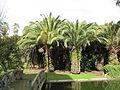 Jardim Botanico Tropical (14028516793).jpg
