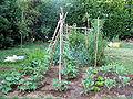 Jardin potager 4.jpg