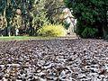 Jesiennie... - panoramio (4).jpg