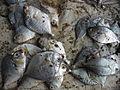 Jilebi fish.JPG