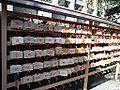 Jishu-jinja Shintô Shrine - Ema.jpg