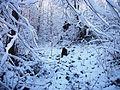 Kalnik snijeg3.JPG