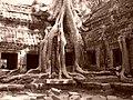 Kambodia,Ta-Phrom - panoramio.jpg