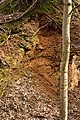 Kamieniołom skał wapniowo-krzemianowych - wyrobisko.jpg