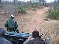Kapama private game reserve la piste Afrique du sud.jpg