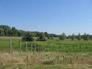 Karađorđevo hunting ground - Special nature reserve Karađorđevo
