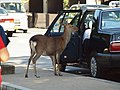 Kasuganocho, Nara, Nara Prefecture 630-8212, Japan - panoramio - ESU.jpg