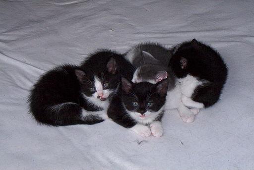 Gatitos chiquitos qué están en crecimiento como una Startup