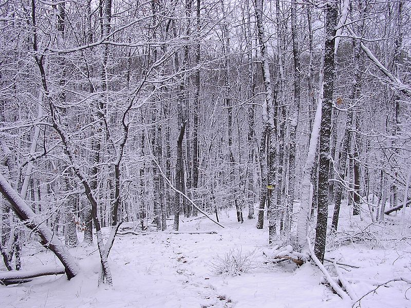 File:Kazanka.winter.in.the.forest.JPG