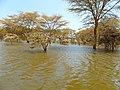 Kenya 2013. Lake Naivasha. - panoramio (18).jpg