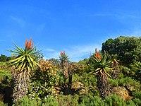 Kirstenbosch National Botanical Garden by ArmAg (29).jpg